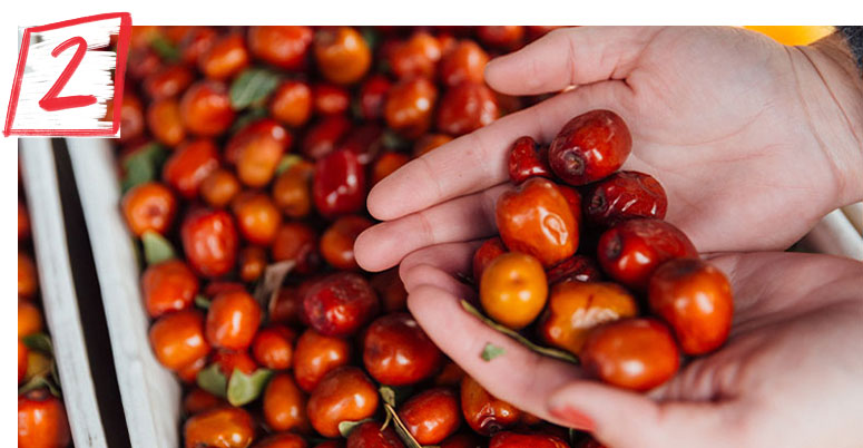 Person holding pile of jujube's in their hands